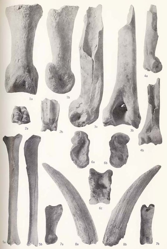 FOSSIL VERTEBRATES FROM THE DOUARA CAVE SITE